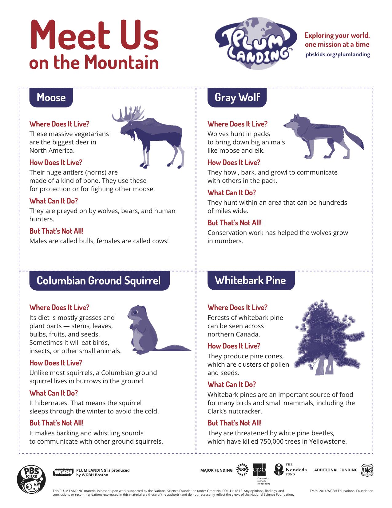 pin the moose on the mountain plum landing pbs kids