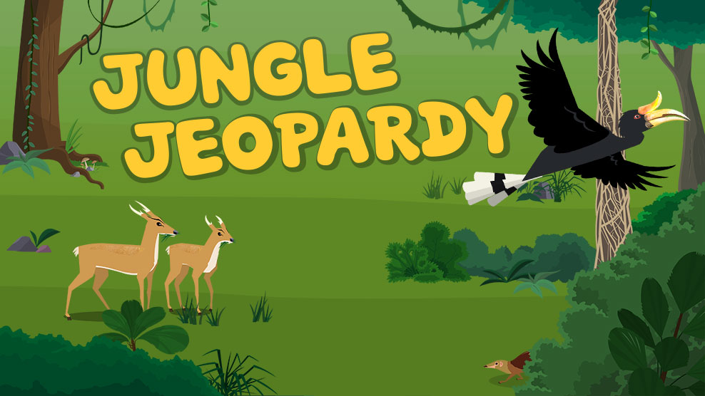 Plum Landing Jungle Jeopardy An Ecosystem Game